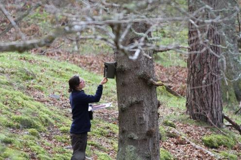 Measuring nest height