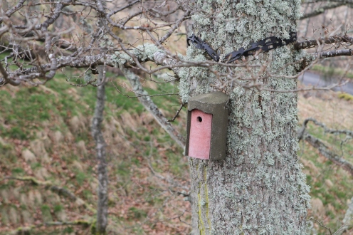 A nestbox