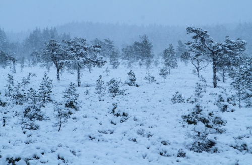 A surprise winter wonderland